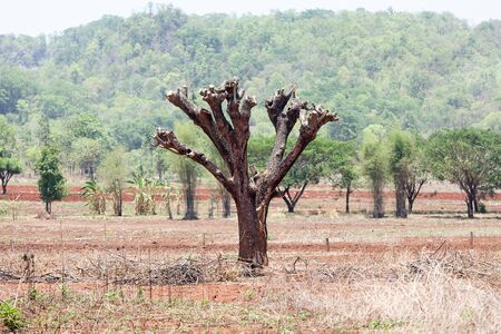 destruct: The destruction of forests for shifting cultivation in Thailand. Stock Photo