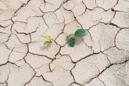 Plant survive on a dry ground and drought conditions