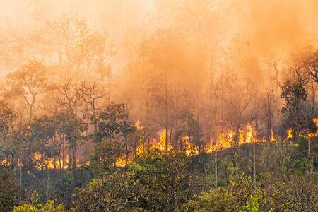 La catastrophe d'un incendie de forêt tropicale brûle causée par l'homme