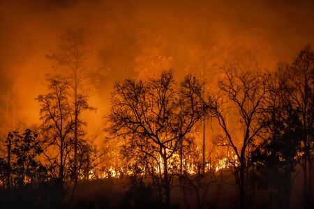 Rain forest fire disaster is burning caused by humans