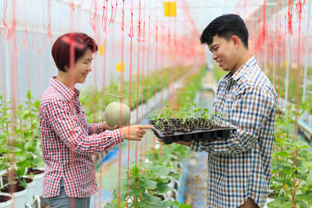Farmer carry melon seedling tray in greenhouse