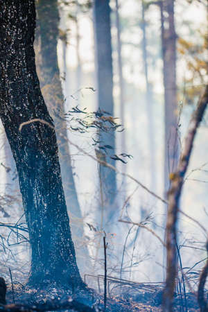 After rain forest fire disaster is burning caused by humans