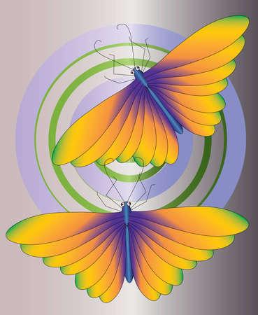 wing orange butterfly  Stock Photo