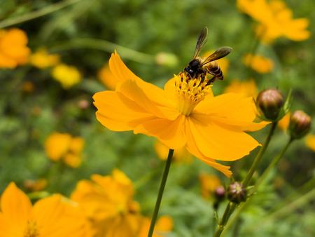 pollination: Pollination Bee Stock Photo