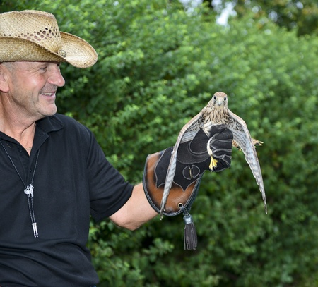 Man with falcons on hand Stock Photo - 15500561