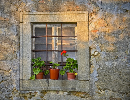 Window flower antique  photo