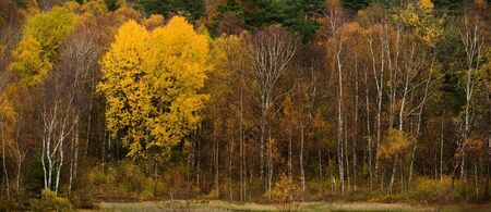 thickets: autumn forest