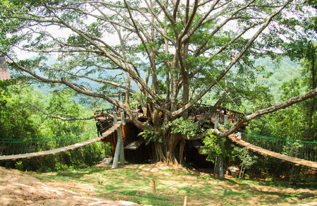 forest big tree giant coffee shop home stay Chiang Mai Thailand  photo