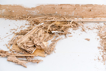 drywood: Termites eusocial insects damage wood in human house