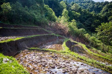local supply: Rice Terraces, Chiangmai Thailand Stock Photo