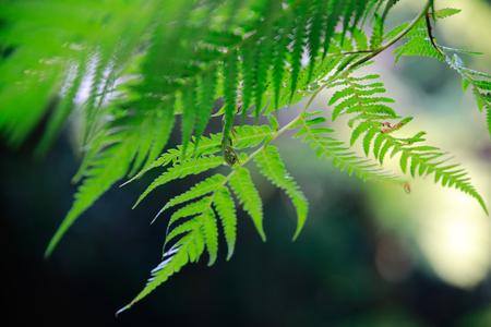green leave with bokeh Banco de Imagens
