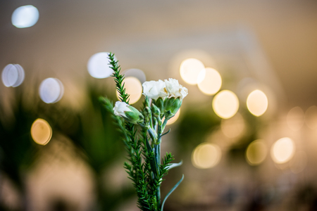 little white flower backgroud with bokeh