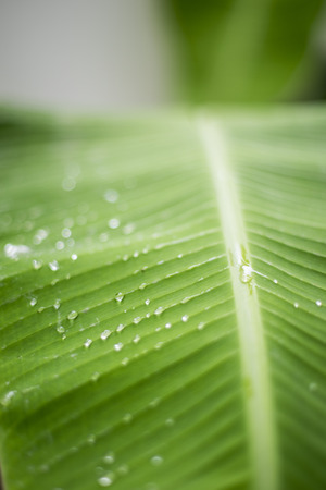 Blur background copyspace water drop on green leaf in rainy season