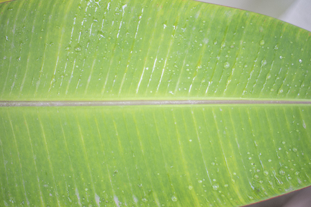 Background  green leaf with water drop in rainy season Banco de Imagens