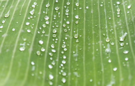 Background water drop on green leaf in rainy season Banco de Imagens