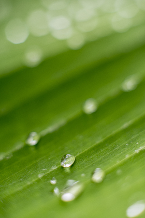 Blur background copyspace water drop on green leaf in rainy season