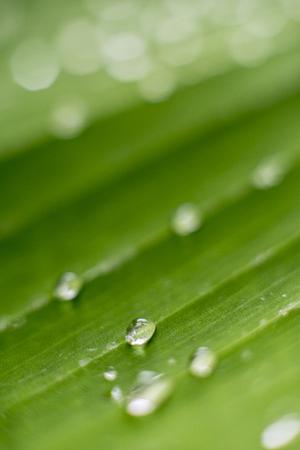 Onduidelijk beeld achtergrondcirkel waterdaling op groen blad in regenachtig seizoen