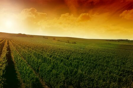 a german vineyard near the rhein river photo