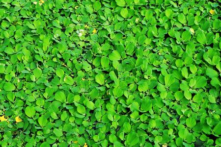 feild: green plants