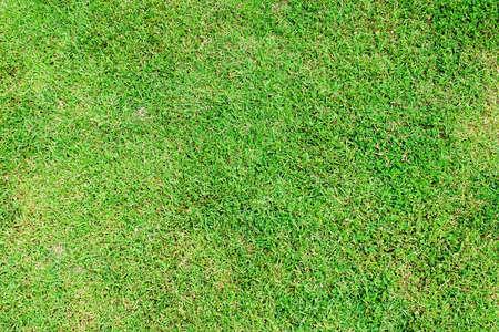 feild: Grass Stock Photo