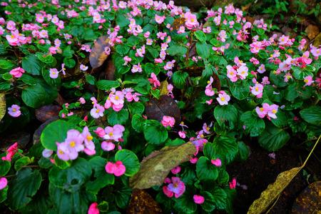 breezy: purple flower in the garden