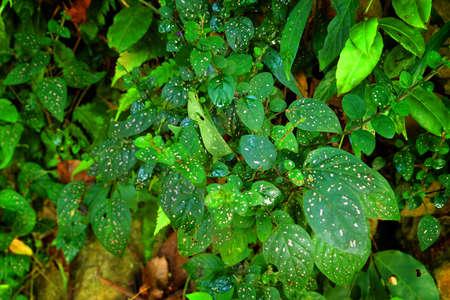 breezy: Beautiful dot on green leaves