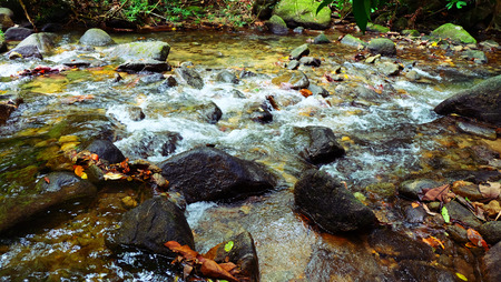 res: res leaves and stream of waterfall in the Thailand tropical forest.