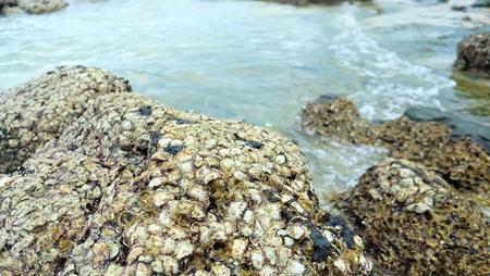 Muerte de concha de ostras en la roca. Foto de archivo - 80714029