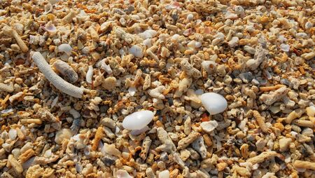 Broken coral, barnacle and seashell on sand beach background.