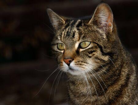 a cute cat Stock Photo - 5027526