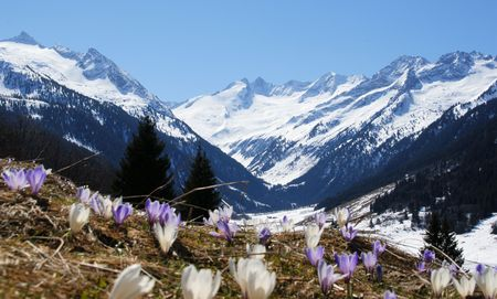 blumen: A beautiful mountain landscape with a flower meadow in the foreground.