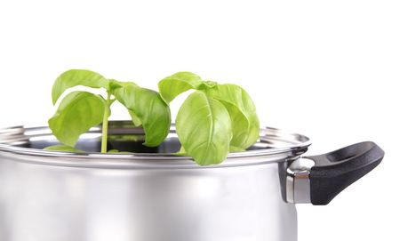 stockpot: Fresh herb in a shiny stainless steel pot