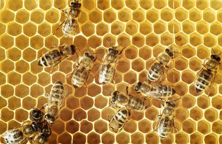 wesp: Bovenaanzicht van bijen op een kam  Stockfoto