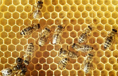 bees: Overhead view of honeybees on a comb  Stock Photo
