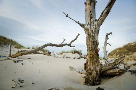 lifeless: Lifeless land   Stock Photo
