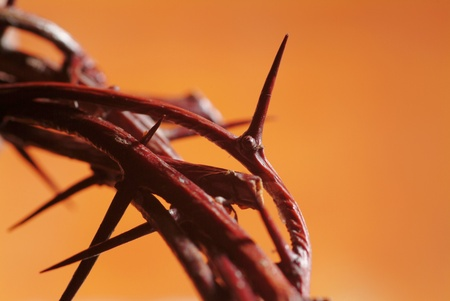 jesus christ crown of thorns: Macro of Crown of Thorns - detail
