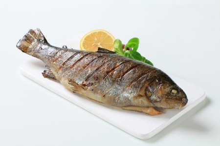 Studio shot of grilled trout