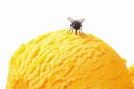 housefly: Housefly on a scoop of ice cream