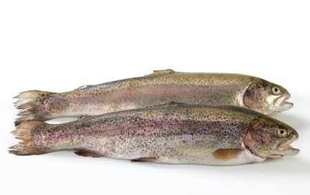 Studio shot of two fresh trout photo