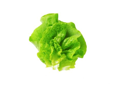lactuca: Butterhead - Also known as Boston or Bibb lettuce
