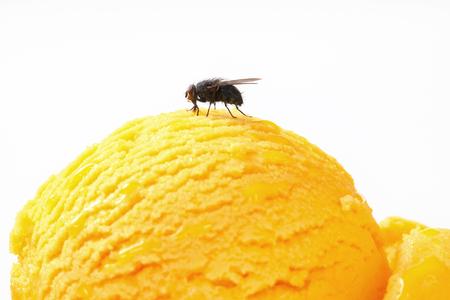 housefly: Housefly on a scoop of ice cream