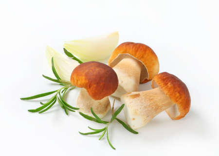 cepe: Studio shot of fresh porcini mushrooms
