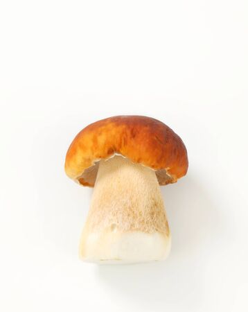cepe: Studio shot of fresh edible mushroom Stock Photo