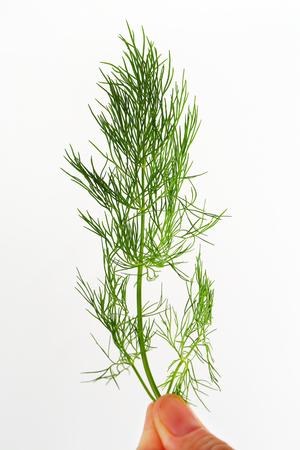 sprig: Sprig of fresh dill weed