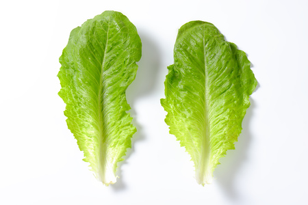 two leaves of romaine lettuce on white background