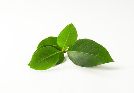 sprig: Sprig of bay leaves on white background
