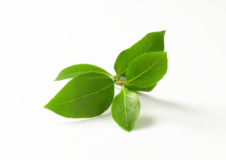 Sprig of bay leaves on white background