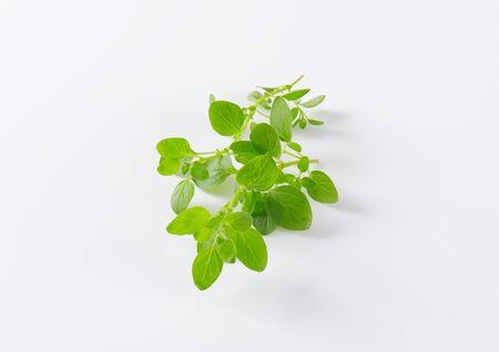 oregano: fresh oregano sprigs on white background