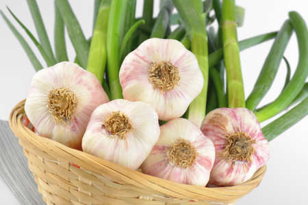 plant antioxidants: fresh garlic bulbs with leaves in basket