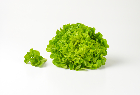 lactuca: fresh green continental curly lettuce Stock Photo